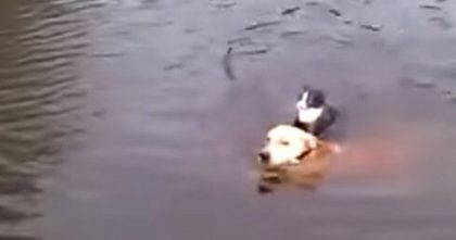Dog Noticed Cat Drowning In The Water, But What He Did Next Is Incredible… Just Watch, WOW.