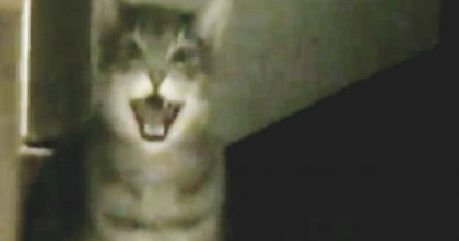 "He Recorded ""Hey"" Instead Of ""Meow"" And The Results Are Hysterical… Just Watch, Oh My Goodness!!"