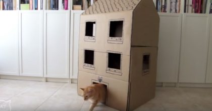 He Started Cutting Up Cardboard Boxes, But When He Was Finished… This Is Genius, Just Watch!