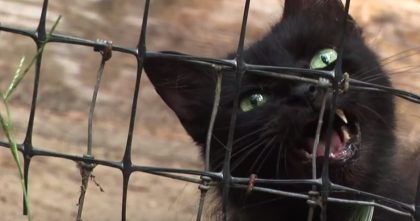 Hundreds Of Cats Found Trapped Inside Abandoned Trailer On Property….But Watch What They Found!