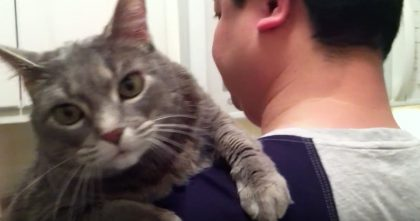 Kitty Demands Love From Her Human And Results Are Just TOO Cute For Words, Just Watch!