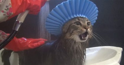 Kitty Needs A Bath, But Before He Gets All Wet, Just Look At His Head… OMG, This Is Genius!!