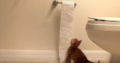 Little Kitten Discovers Toilet Paper For The First Time, But The Results? Just WATCH What Kitten Does!!