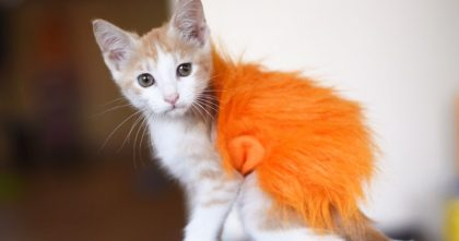 Kitten Was Attacked, But To Protect Her Wounds, Just Watch What Rescuers Did… ADORABLE.