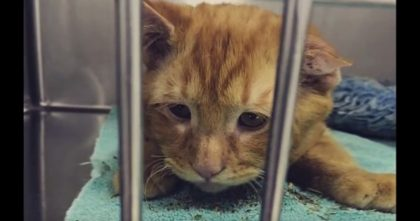 Sad Kitty Behind Bars Was Moments From Being Euthanized, But Then…The Ending Is AMAZING.
