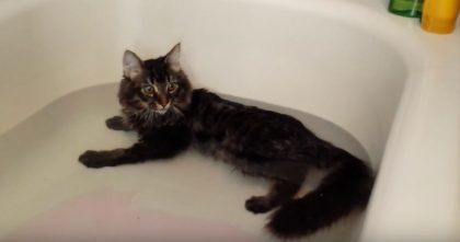 She Put Some Water In The Tub, But When This Kitten Notices…I CAN'T Believe His Reaction, Omg!!