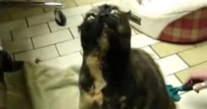 She Starts Brushing Her Cat's Back, But When You Hear The Cats Response… Can't Stop Laughing, LOL