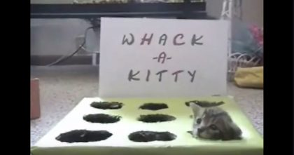 Kittens Won't Stop Playing, So They Created The Funniest Game You've Ever Seen… Hahaha!!