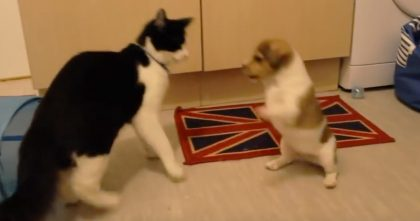 They Got New Puppies, But When The Cat Discovered Them… Just Watch The Response!