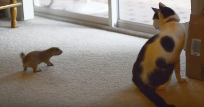 They Introduce Their Cat To A Prairie Dog, But Watch The Results When They Start Recording…