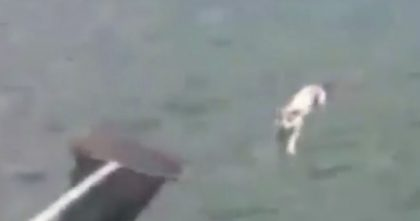 They Spotted Something Strange Swimming In The Sea, But Then… Is That A Cat?? UNBELIEVABLE!