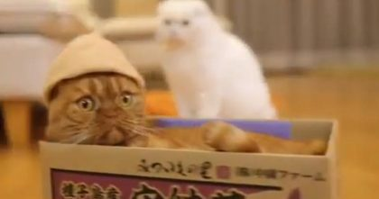 They Tied A String To The Box, But When The Cat Jumps Inside… Just Watch, This Is TOO FUNNY!