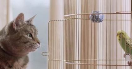 This Cat Walks Up To The Cage, But When You Watch Till The End… This Ad Is GENIUS, Omg!!