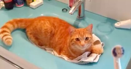 Watch Cats Reaction When Man Picks Up His Electric Toothbrush… This Cat Is TOO Much!!