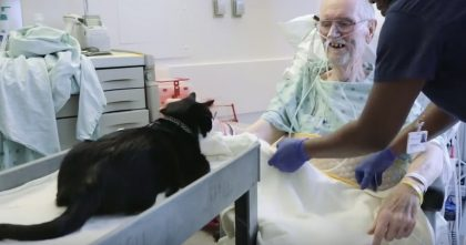 Watch What This Cat Does When He Visits The Hospital… This Is The SWEETEST Thing Ever!!