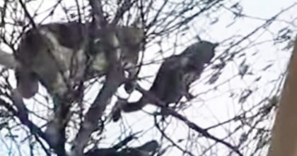 "Dog Tries Chasing Cat Up The Tree, But What Happens Seconds Later… ""I Can't Stop Laughing, LOL."""