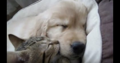 Doggie Goes To Sleep, But When The Kitten Discovers Him… This Is The SWEETEST, Just Watch!!
