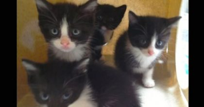 Grieving Cat Mom Lost All Her Babies, But Then The Most Amazing Miracle Happened… Just Watch!