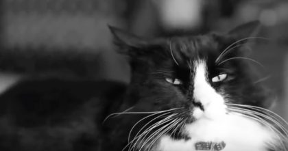 Henri The Cat Has To Go The Vet, But When You Hear His Thoughts… Hahaha, I Laughed So Hard!
