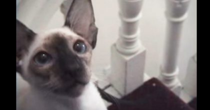 Human Throws Kitty's Favorite Toy, But Then… Now Watch How The Cat Reacts, HILARIOUS!!