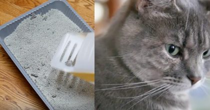 If You Hate Scooping Cat Poop, Check Out This DIY Hack… So Clever And This Is GENIUS, Watch Video!