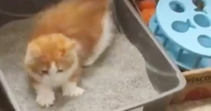 "Kitten Discovers ""Litter"" For The First Time, But When You See His Reaction, It's Just TOO Funny!"