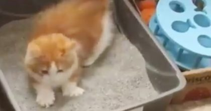 "Kitten Discovers ""Litter"" For The First Time, But Watch His Reaction, HILARIOUS… Hahahaha!!"