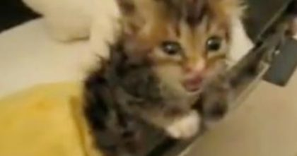 Kitten Trapped Under House For Almost A Week Nearly Died, Until A Miracle Happened