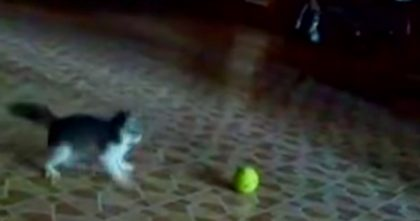 Kitten Tries To Defend Himself Against 'Scary Intruder' But Watch How He Reacts… Hahaha!!
