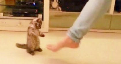 She Starts Tapping Her Toes To The Music, But Now Watch How The Kitten Responds… OMG!!