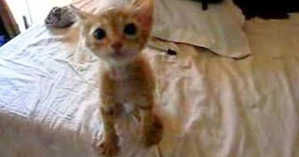 Watch How This Kitten 'Demands' For Food After Being Rescued From Starving On The Streets