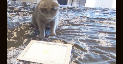 When This Cat Discovers The iPad, You've GOTTA See His Reaction…I Can't Stop Laughing!!