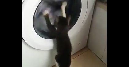 When This Kitten Discovers The Washing Machine, He Can't Stop Doing The Funniest Thing… LOL!!