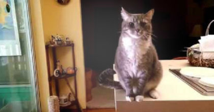 Cat Bows To Human Like A Little Gentleman Whenever She Walks In…Just Watch, Hahahaha!!