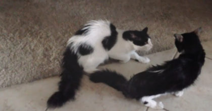 Cat reunited after a month lost, but when his brother walks out and notices… Now I'm in tears