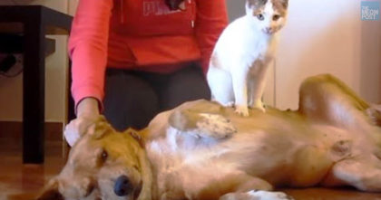 """Dog """"Adopted"""" A Stray Cat He Met On A Walk, But Wait Till You See Them Together Now…"""