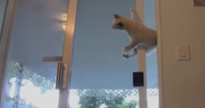 Kitten shocked everyone in the house when he did this to get inside… Nobody expected to see THIS.