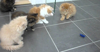 "She gave these fluffy kittens a toy ""bug"", now watch their reaction… FUNNIEST thing ever, hahaha!!"