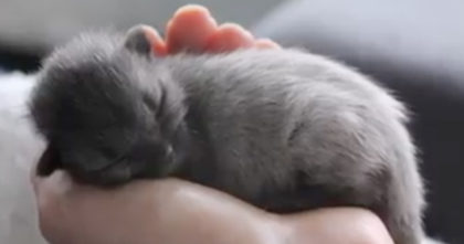 Kitten looked grey like a mouse, but then he grew up… The results? I have no words for THIS.
