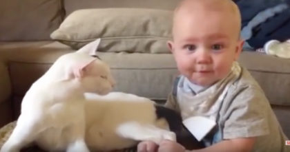 They adopted the cat, but they didn't know how their baby would react until they saw this…