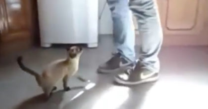 Thirsty kitten has the most ADORABLE daily routine, and it will melt your heart… Awwwww!!