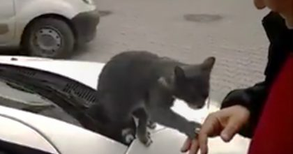 When this guy walked up to a stray cat, the sweetest thing happened… This will melt your heart, Awww!!