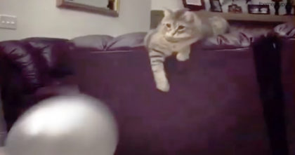 They're bouncing the ball back and forth, but when the cat is done… Keep watching till the end!!