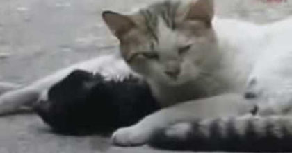 Cat's best friend was hit by a car, but when rescuers arrive…Watch what they see next, HEARTBREAKING.