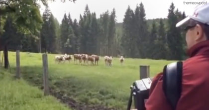 He Starts Playing The Accordion, But When These Cows Hear It? They Just Can't Get Enough!!