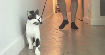 He's Attempting To Walk His Cat On A Leash, But Cats Response Is Hilarious When Roles Reverse