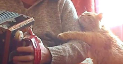 He's playing his accordion, but when kitty hears it…. Now Watch How The Cat Responds to him