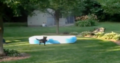 Kids are hiding under the pool, but what they record the dog doing is the funniest thing ever!