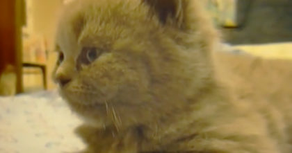 Kitten gets sleepy on the bed, but then he does his favorite thing – It's the BEST thing ever!!