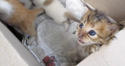 Kittens trapped in a box on roadside crying for help… Now watch when their cries are answered!